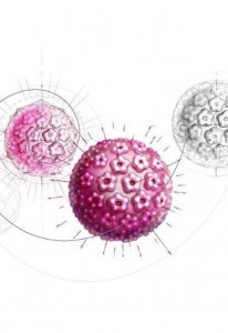 hpv 123115 L 206x300 Czy znany jest Tobie wirus HPV?
