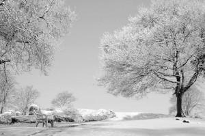 826020 zima przeszla przez park 1 300x199 Pani Zima