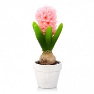 swieca hyacintha 300x300 Wiosna w naszych domach
