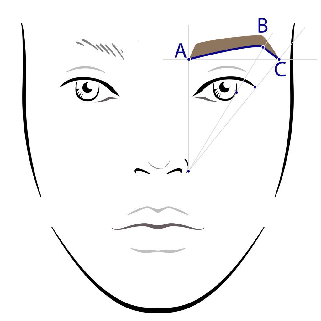 SINSKIN Diagram brwi 1024x1024 Idealna oprawa twoich oczu z SINSKIN – sprawdź jak stylizować brwi!